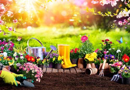 Big Ideas for Your Garden